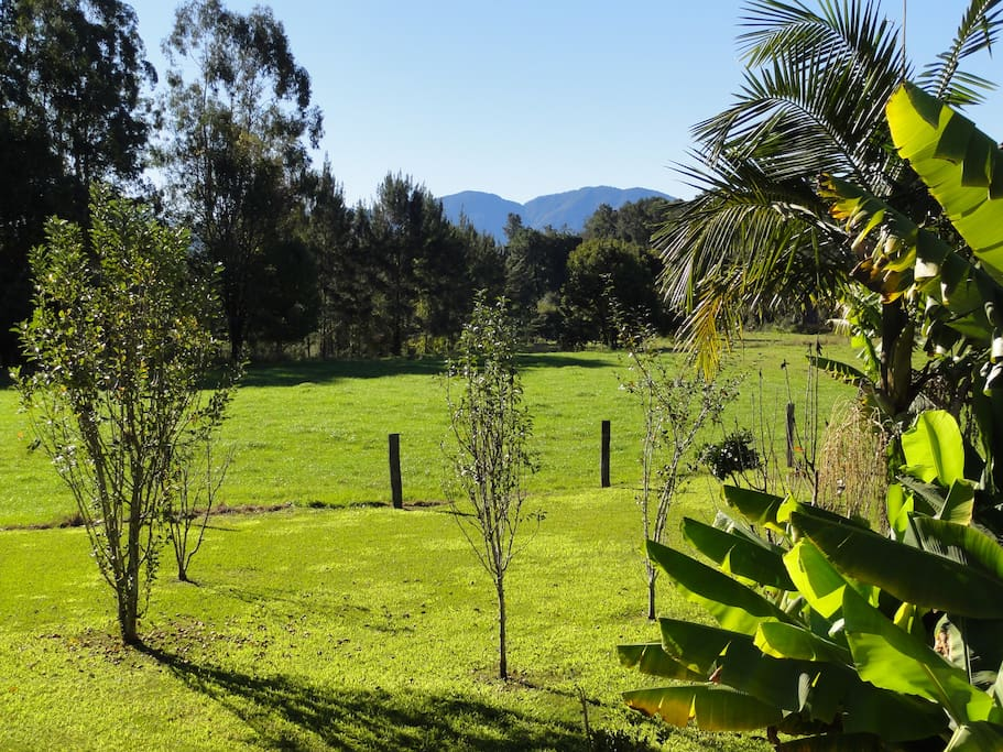 Accommodation, views - Natural detox and living food retreat with Denene McArthur. Healthy food & clean eating - raw food recipes, juice cleanse, fermented foods, colonic irrigation, infrared sauna. Following the principles of Ann Wigmore. Bellingen near Coffs Harbour, Mid North Coast NSW.